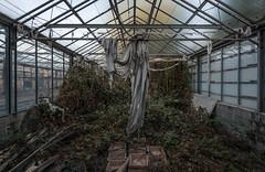 DSC_6138 (Foto-Runner) Tags: urbex lost decay abandonné car auto voitures ancêtres épave