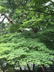 足立美術館 花鳥公園 第四天 2017