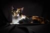 Meow (Cowtown Images) Tags: cats strobist lp180 lumopro lastolite nikon nofilter 50mm
