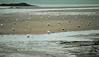 Bouees - atana studio (Anthony SÉJOURNÉ) Tags: saintbriac sur mer maree basse plage beach bouees flotteurs atana studio anthony séjourné buoyant