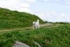 Totale Begeisterung (balu51) Tags: wanderung wandern wandernmithund hund kuvasz ungarischerhirtenhund landschaft alpstrasse wiese wildblumen blumen gras himmel wolken nachmittag weiss grün hellblau sommer hiking hikingwithdog dog meadow green white paleblue sky clouds swissalps switzerland grisons graubünden surselva juni 2017 copyrightbybalu51