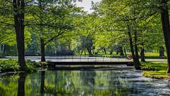 A Walk in The Park (Jens Haggren) Tags: park bridge trees water reflections light green drottningholm stockholm sweden jenshaggren