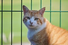 Gino (En memoria de Zarpazos, mi valiente y mimoso tigre) Tags: gino pezuñotas gato gatto cat kat katt pushi pishi kot chat katze mio neko