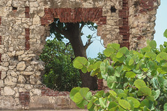 DSC01044 (someNERV) Tags: aguadilla puertorico wilderness wildo beach tropical borinquen caribbean ocean coastline hot sand water turquoise sony alpha a6300 apsc adapted minolta rokkorx 50mm f14 zhongyi lensturboii travel vacation