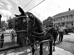 Amish Parking (BadBlackdog9) Tags: mesopotamia oxroast ohio amishcountry amish mennonite streetphotography peoplewatching horse horses workhorse horseandbuggy carriagehorse carriage parkinglot endofthecommons generalstore simplelife