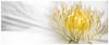 White Petal (MontanaRoots (aka Craig)) Tags: zeiss canon 5d markiv nature flora 135mm bloom spring blossom vine macro flower
