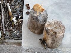 IMG_8826 (Chat Malicieux) Tags: garfield joana tigerchen katzen cats
