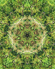 Rumble in the jungle (STEHOUWER AND RECIO) Tags: rumble jungle trees leaves nature natuur bomen bladeren kaleidoscope kaleidoscoop caleidoscoop caleidoscope abstract perspective effect hss pattern patroon