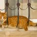Imprisoned cat