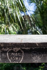 NIC M ASH F (abbey j) Tags: carving wood initials rail graffiti florida fortislandtrailpark pier boardwalk palm tree green brown horizontal citruscounty carve