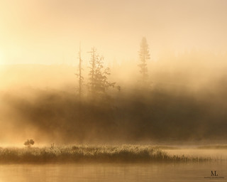 Un marais brumeux