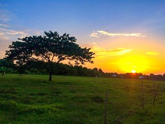 """Le soleil brille pour tout le monde"" (Attasit A'tta) Tags: sunset tree nature field beautyinnature landscape tranquilscene orangecolor tranquility sky growth scenics nopeople grass outdoors sun agriculture ruralscene day"