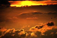 _DSC0002 Sundown in storming rain (tsuping.liu) Tags: outdoor organicpatttern sky serene sunset sun skyline cloud coast closeup cosmos depthoffield dusk depth deptoffield ecology ecotour exquisitesunsets perspective feeling field holizon colorofsky golden moment mood photoborder photographt twilight theperfectphotographer amazing zoomin