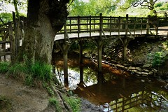 The famous river game starts here (smcnally24601) Tags: winnie pooh 100 acre wood sticks bridge country woods walk east sussex england britain british english summer landmark