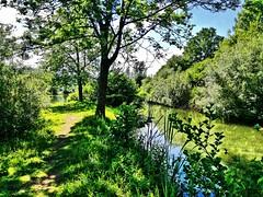 Halbinsel (almresi1) Tags: isle insel lake see plüderhausen lorch naturschutzgebiet grün weg pfad path way tree baum
