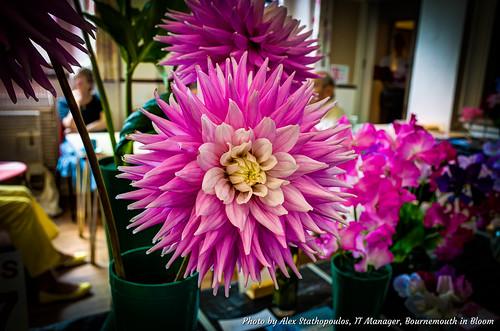 2017 Summer Flower Show 52