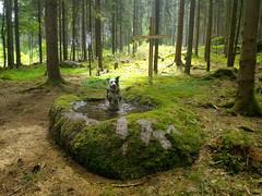"""Finlay at a """"Sacrifice Stone"""" (Regina_Hoer) Tags: schalenstein schüsselstein felsen rock opferstein fichtelgebirge bayern bavaria photography nature landscape """"reginahoer"""" zenfone2"""