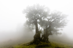 Spooky fog (Rico the noob) Tags: dof trees published 2017 landscape tree travel nature d500 mist outdoor fog madeira grass 1120mm 1120mmf28