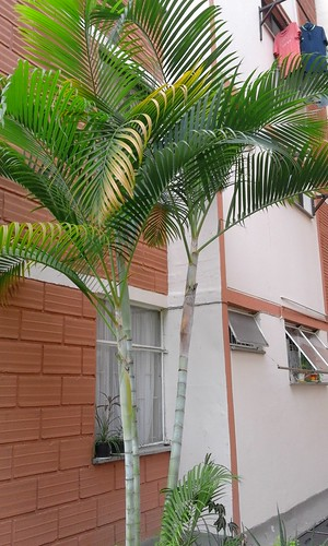 Young Palms
