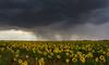 La tormenta (Jesus_l) Tags: europa españa valladolid tiedra camposdecastilla tormenta jesúsl