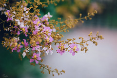 (Sài Gòn - 01665 374 974) Tags: snor sony sigma photography photographer flickr digital new featured light art life colorful colour colours photoshop blend asia camera sweet lens artist amazing bokeh dof depthoffield blur flower flowers garden old blue