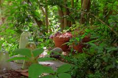 S.MasséMaisonduMajordome©TourismeHautLimousin-57 (tourisme_hautlimousin) Tags: jardin gîte vacances hautlimousin patrimoine location fleurs botanique tourolim