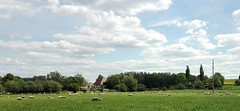 the flock (erix!) Tags: sheep schafe herde flock tiere bucolic rural ländlich countryside weide schafweide ruhrtal clouds summer sommewr frühling