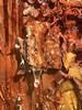resin (ikarusmedia) Tags: resin tree translucid closeup macro national park zempoala morelos mexico wood dripping