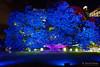 20170531-46-VIvid Light display at Sydney Botanic Gardens (Roger T Wong) Tags: 2017 australia nsw newsouthwales rogertwong sel2470z sony2470 sonya7ii sonyalpha7ii sonyfe2470mmf4zaosscarlzeissvariotessart sonyilce7m2 sydney sydneybotanicalgardens vivid festival illuminated lights night tree