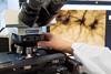 © FSL - Laboratorio di Neurobiologia del Comportamento - 01 (Fondazione Santa Lucia - IRCCS) Tags: fondazionesantalucia irccs stefanopuglisiallegra ricercabiomedica laboratorio sperimentazione scienza neurologia neurobiologia comportamento medicina neuroscienze salute