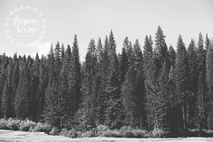 Yosemite 3 WM (Mariana Warne) Tags: yosemite national park canon canon6d california sunnycalifornia southerncalifornia nature naturallight landscape mountain pines pinetrees bluesky falls trip marianawarne signofspring spring sunshine sandiego sandiegophotographer escondido escondidophotographer