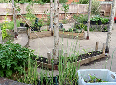 June19th, 2017 Erleigh Road Community Garden (3) (karenblakeman) Tags: erleighroadcommunitygarden erleighroad reading uk 2017 june vegetables food4families 2017pad berkshire rfgn readingfoodgrowingnetwork