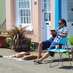IMG_8477 (Deida 1) Tags: sleeping blanket street suffolk uk eveningsunshine dogs
