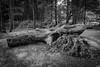 Tierpark 9 (FSR Photography) Tags: tierpark stimmung steine holz baum bäume sw schwarzweis schwarzweiss bw blackandwhite blackwhite monochrome monochrom canon canon400d canondslr dark wood trees sun sonne frühling spring fsr fsrphotography