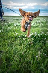 DSC_4467 (Evo800) Tags: walks cooper sky grass cloulds sunset water forth scotland nikon d610 deer skylark