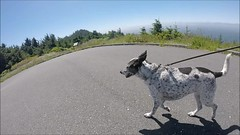 follow Blanca on Cape Sebastian (Claudia Künkel) Tags: capesebastian oregoncoasttrail hike blanca bordercolliemix dog pacificocean meyersbeach gopro hero3silveredition oregoncoast hunterscove sitkaspruce views