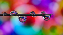 Needle (3198) (YᗩSᗰIᘉᗴ HᗴᘉS +6 500 000 thx❀) Tags: drop drops droplet macro color needle creative hensyasmine
