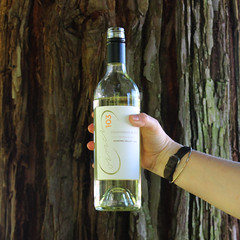 2015 Sauvignon Blanc, Sonoma Valley (sarahstierch) Tags: wine vino wines drinking corner103 sonoma california winecountry promotionalphotography canon outdoors outside marketing plaza sauvignon blanc white tree hand