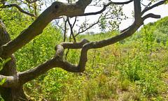 Het Zwanenwater # 3 (schreibtnix on 'n off) Tags: reisen travelling nierlande netherlands callantsoog hetzwanenwater natur nature pflanzen plants baum tree äste branches olympuse5 schreibtnix