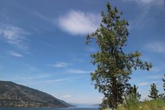 Lake Okanagan, Kelowna BC (nikname) Tags: lakeokanagan kelownabc knoxmountaintrail kelownabccanada bcparks trees