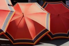 sestinska-umbrella_