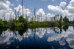 South Georgia (Jon Ariel) Tags: okefenokee swamp georgia ga trees water reflection
