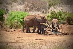 A Gift From Man (The Spirit of the World) Tags: conservatoryarea waterhole water kenya sataoeleral amboseli wildlife nature bush brush gamereserve nationalpark africa eastafrica