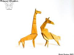 Origami Giraffes - Barth Dunkan. (Magic Fingaz) Tags: barthdunkan girafe giraffe jerapah jirafa origami žirafa καμηλοπάρδαλη жираф жирафа जिराफ़ ยีราฟ 기린 キリン 长颈鹿