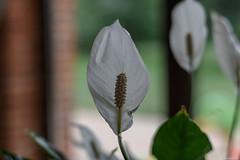 il battesimo di Angelina (Clay Bass) Tags: 50mm andrea angelina roccaforte battesimo bokeh d500 family flowers interior nikon