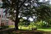 Onder de grote ceder (Sint-Katelijne-Waver) Tags: ursulinen ursulines ursulinenwaver sintursulainstituut park sui school cedrus ceder conifeer tree boom landschapspark felixbrouwers kindertheater kinderen buitenschoolsekinderopvang vijver