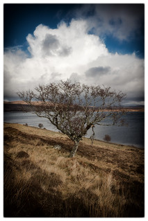 Tree above Loch Loyal