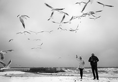 sea life (photoksenia) Tags: outside couple sea winter monochrome blackandwhite bw beach blacksea odessa ukraine seagull street people sony ilce7m2