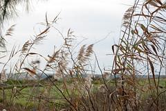 naturaleza (Jonathan Vázquez Flores) Tags: jonathan yolanda yoli nikon d90 españa andalucia huelva cordoba naturaleza campo paisaje okuri