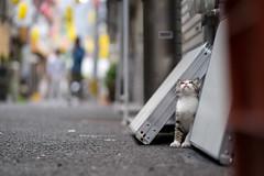 猫 (fumi*23) Tags: ilce7m2 sony 85mm fe85mmf18 sel85f18 cat kitten animal street alley bokeh depthoffield dof miyazaki ねこ 猫 ソニー 路地 街 仔猫